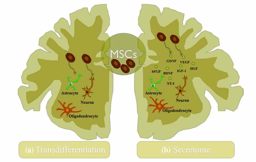 Stem Cell Secretome neuroprotection neurotrophic activity