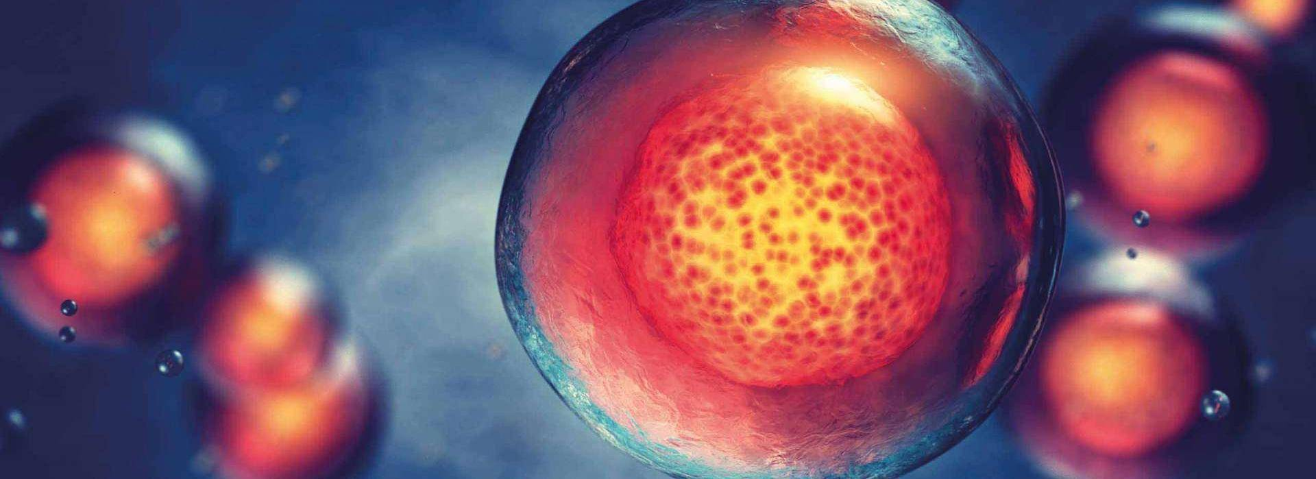 Stem Cell Secretome | Exosome Therapy